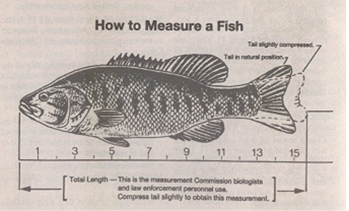 fishmeasure