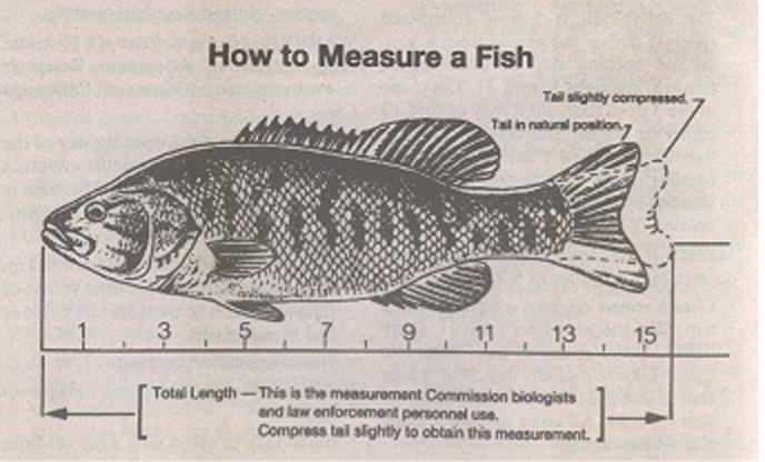 fishmeasure